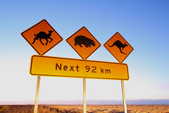 Camel, wombat and kangaroo warning sign. Nullarbor Australia (john white photos) Tags: road travel warning landscape dawn lights highway flat australia camel kangaroo roadside wombat nullarbor johnwhitegettyimages