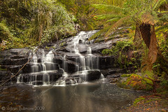 Better Get to Livin' (WilliamBullimore) Tags: green nature wet water landscape waterfall nationalpark moss log rainforest rocks stream rocky aus