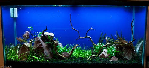 Paul's 90G - Aquascape Just Planted