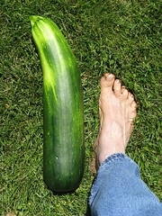 Zucchini By The Foot