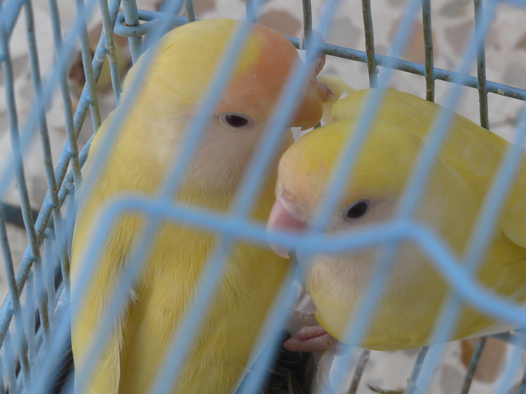 my parrots latest pics - More than 1300 Pet Products Under