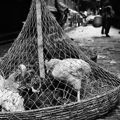 Chickens await their fate, Kolkata. (ndnbrunei) Tags: travel blackandwhite bw india chickens 120 6x6 tlr film rollei mediumformat square kodak bn mf kolkata backstreets xenar rolleicord classicblackwhite analoguephotography autaut rolleigallery ndnbrunei tmy2 kodak400tmy2 50yearoldcamera ilovemyrolleicord