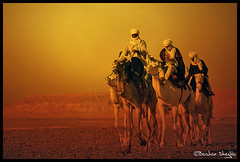 They Are Coming! (Bashar Shglila) Tags: world sahara photography algeria gallery desert photos top sony best most arab worlds knight caravan popular libya camels dsc touareg ghadames libyen  lbia  libi mahari libiya superaplus aplusphoto liviya ghadamis libija   littlestoriespicswithsoul  hx1   ridser updatecollection dschx1     lbija  lby libja lbya liiba livi  kunstgriffskunstgriffe   teniri mygearandmepremium mygearandmebronze mygearandmesilver mygearandmegold   blinkagain