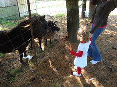 Feeding The Horses & Sheep