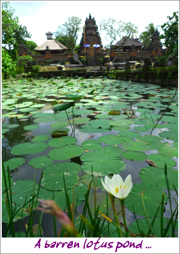 Lotus Pond Ubud
