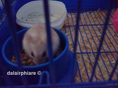 "MaKaNan HaMSteR ""FaVoRitE FoOD"" care to Your HamSter"