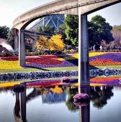 Disney Florals