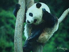20110602酷節能體驗營 (80) (fifi_chiang) Tags: zoo taiwan olympus taipei ep1 木柵動物園 17mm 環保局 酷節能體驗營