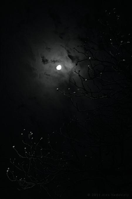 Light side of the moon © 2011 Alex Nedoviziy