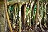Extremidades (Albertina Fotografia) Tags: contraluz mexico arbol mar tulum aves cielo caribe vegetacion
