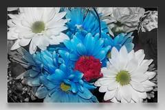 In Their Honor (emeraldspiryt) Tags: flower dedication rose whiteflower blossom framed daisy bloom fade carnation redflower redwhiteblue blueflower babysbreath beautifulshot memorialday2009 worldworx