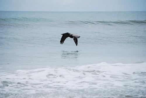 SS_21_Pelican[2009]