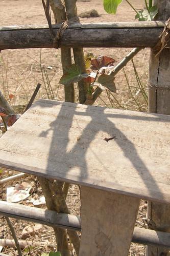 111.樹枝剪影