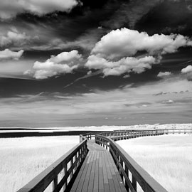 Fire Island Infrared at Watch Hill