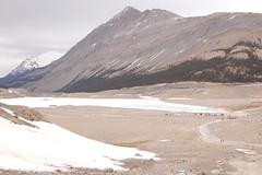 DSC_2664 (petevonmeat) Tags: canada glacier athabasca