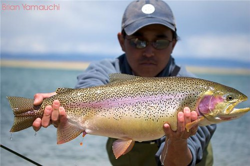 brianyamauchi big fish