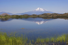 ~ Reflections of Mount Shasta ~ (~ Western Dreamer ~) Tags: northerncalifornia mountshasta basslake supershot lakereflections westerndreamer landscapebeauty reflectiveshots peaceawards siskiyoucountycalifornia flickrclassique candidcapturesphotography northerncalifornialakes shastavalleywildlifearea mountshastareflections basslakenortherncalifornia