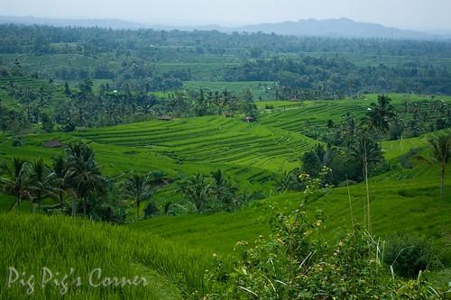Bali 31-2