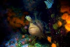 Strangest. Fish. Ever. (Pedro Silvares) Tags: california camera sea usa coral lens aquarium bay monterey underwater unitedstates 28105mmf3545d caral motereybayaquarium nikond80 stockcategories nikkor28105mmf3545d