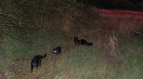 kittens hunting