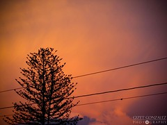 Unexpected Sunset @ El Hatilo (Gigi) Tags: sunset tree backlight contraluz arbol atardecer venezuela caracas cables puestadesol naranja ocaso anaranjado elhatillo cablesatravesados