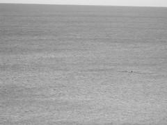 DSCF0854_1 (Stinky Cha Cha Bingo) Tags: whale loungeroom lorne