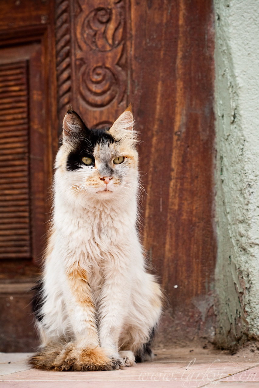 Cat #1, Harar, Ethiopia, July 2009