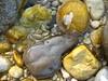 i colori dei sassi di fiume