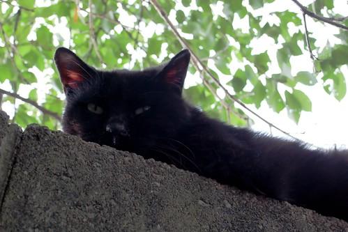 Today's Cat@20091012