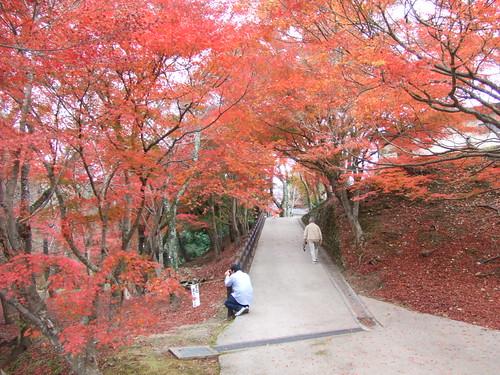 尾関山公園11