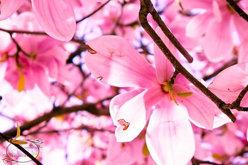 114/365 - Light Through the Petals