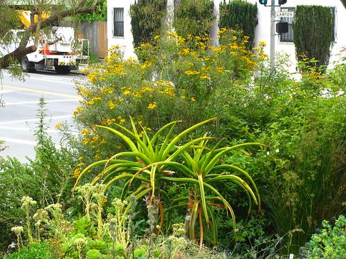 Garden for the Environment, San Francisco, CA.