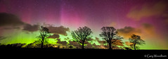 The Magic Trees - Aurora Borealis, Doxford, Northumberland (Gary Woodburn) Tags: aurora borealis northern lights trees night sky stars starry landscape doxford northumberland canon 6d samyang 24mm