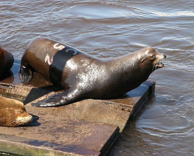 Sea Lion 5 - new king of the dock