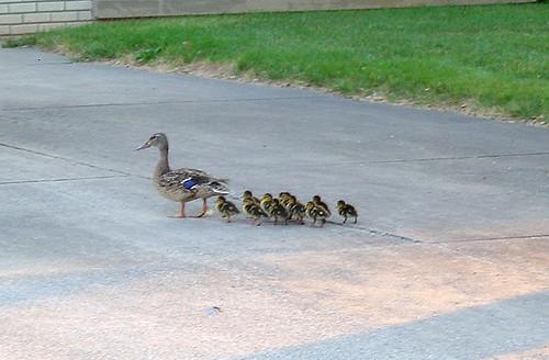 07/09/07 ducks