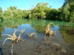 DSC00157 (mjmaa33) Tags: newzealand lake tekapo