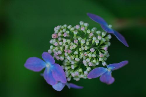 200906273554flowerworks