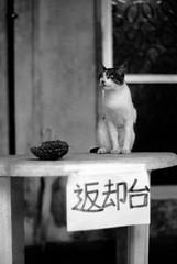 再開 (shigemi) Tags: street bw monochrome japan digital 沖縄 竹富島 お散歩 モノクロ 白黒 m82 アートフォト 八重山観光