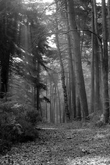 Lickey Hills (matthew.morgan95) Tags: blackandwhite bw monochrome birmingham lickeyhills theworldwelivein monochromelandscape