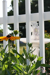 Through the Fence (antoinette qtks) Tags: fence blackeyedsusan whitepicket