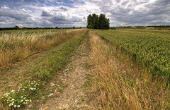 England: Northamptonshire - Country Trail (Tim Blessed) Tags: uk trees sky nature clouds landscape countryside scenery wheat farming tracks trails crops paths singlerawtonemapped