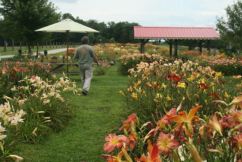 Windy Ridge Farm and Daylily Garden