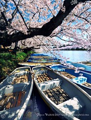Memories of Spring  Glenn E Waters  (Explored)  7,300 visits to this photo. Thank you. (Glenn Waters in Japan.) Tags: flowers sky tree castle japan reflections boat spring nikon bank explore  sakura cherryblossoms moat japon    explored  d700  nikond700  glennwaters