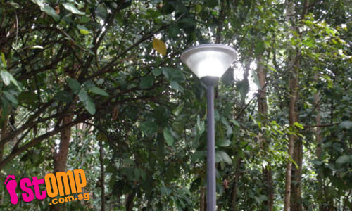 Rare White Bat Lily adds special touch to Bukit Batok park