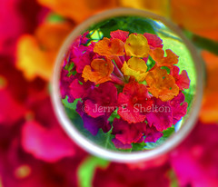 Point of View:  Lantana (Uncle Phooey) Tags: red orange flower macro green yellow closeup lens colorful searchthebest explore blooms lantana frontpage hdr unclephooey pointofviewlantana