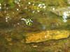 la libellula innamorata
