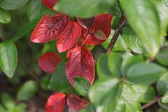 Tidlig hst (fotomormor) Tags: flower blomster blader rdt grnt