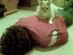 I Finally Got Him! (jess_mcculloch) Tags: cats pets nick cinder