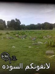 (GADH) Tags: saad abha ksa asir     gadh   alsodah