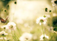 into the light (raceytay {I brke for bokeh}) Tags: pink light sun flower canon yum purple bokeh flight monarch flare much nutella ha pincushion ppt ithink kazam rly 50mmf18ii seewhatididthere yourtaghere bokehlicious wontbethelast flutteryby andsomedonuts 5dmarkii alittleofboth follish summerorfall yowlhr dhmel richmondgardencentre couldnotcropit justcouldntnotmakemyselfcropit itflutteredby runningoutoftagidears allineedsthefifty mebbeabagel howboutafaveforthepoorhangrydino surehaveoneofmine doesthedinonothaveanymorefudd perhapsababystegosaurusonwhichtonom chocolatecovereddinosaurs chocolatecoveredanything chocolatecoveredchocolateisalwaysmyfavourite ibetevenchocolatecoveredbrusslesproutstastegood wheniwasasmallchildkidswouldmakefunofmynameandcallmebrisselsprouts chocolatecoveredmeatloaf youmusthavebrissledatthat isntthefirsttime krlyhangrynao iwasmakingthewittywithmaterialprovidedbymbrisson forwhichiammostthankful hungermakedinoslow plstakesomeaway donutglaze thefiftysallineed helpahungrydinoout damnthisflickrthingisslowtoday justasnack moarfuddpls orsomechocolate imoffmymeatatm iknowiknowohtheirony itssoironic areyoureducedtoeatingthevegetation someoneshouldmakeacomicaboutit thankyouforbringingupthatpainfulmemory whatdidyoudotalktoyourself yeahgotitnao ihaveaheadfullofmeatloafnow brainneedglucoseyouknow ineedless anyoneformeatloaf